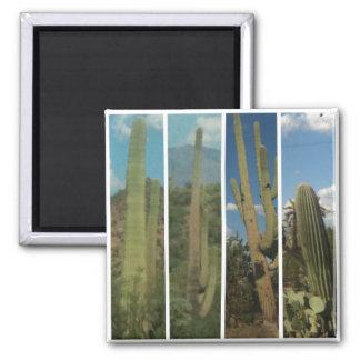 Cacti Square Magnet