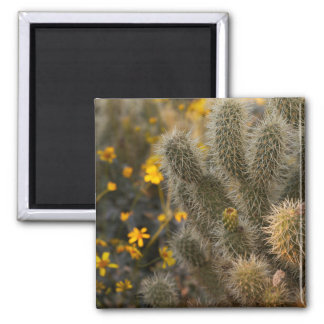 cactus and wildflowers magnet