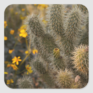 cactus and wildflowers square sticker