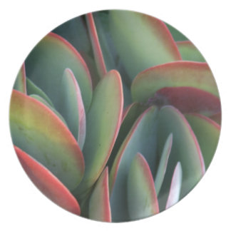 Cactus beauty party plate