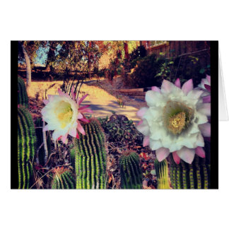 cactus bloom card