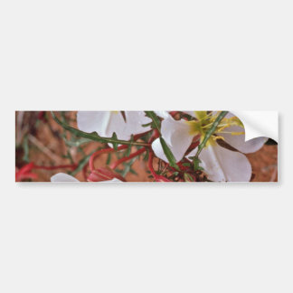 Cactus blooms in the spring Pink flowers Bumper Stickers