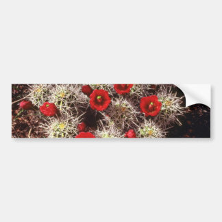 Cactus blooms in the spring Pink flowers Bumper Sticker