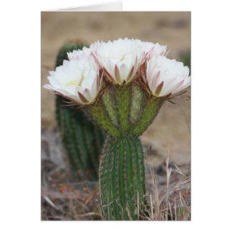 cactus bouquet card