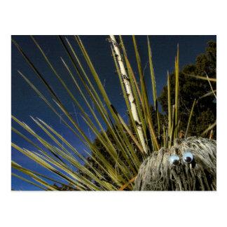 cactus buddy #1 postcard