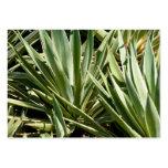 Cactus business cards