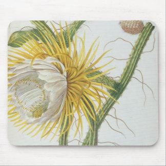 Cactus: Cereus, from Trew's 'Plantae Selectae' 175 Mouse Mat