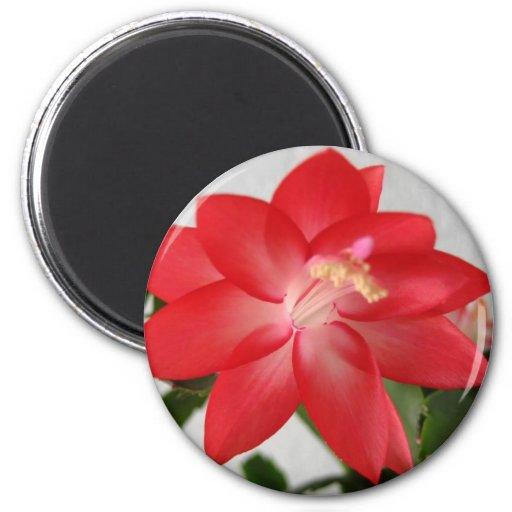 cactus,christmas cactus 6 cm round magnet