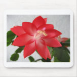 cactus,christmas cactus mouse pads