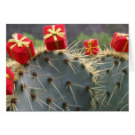 Cactus Christmas greeting card