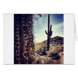 Cactus Closeup Greeting Cards