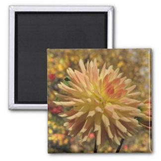 Cactus Dahlia Square Magnet