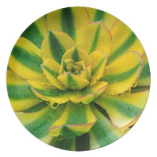 Cactus Design Plates