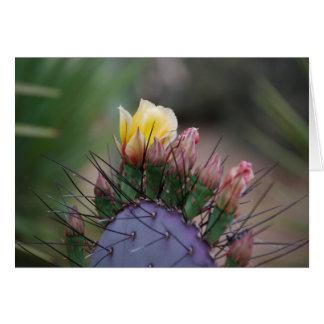 Cactus Flower 7 Card