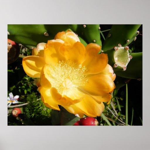 Cactus Flower Blooms in Orange Poster