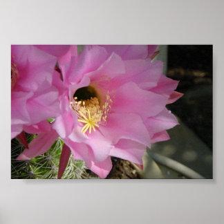 Cactus flower poster