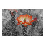 Cactus Flower Posters