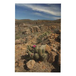 Cactus Flowering Wood Print
