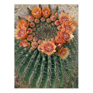 Cactus Flowers 002d Postcard