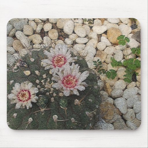 Cactus Flowers Mouse Pad