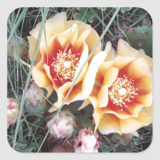 Cactus Flowers Square Sticker