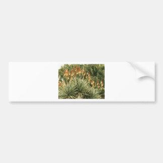 Cactus Garden Drawing Bumper Sticker