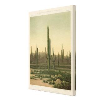 Cactus grove, Arizona Canvas Print