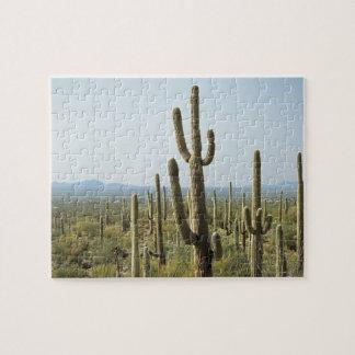 Cactus in Saguaro National Park , Arizona 2 Jigsaw Puzzle