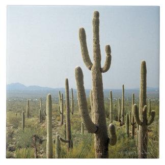 Cactus in Saguaro National Park , Arizona 2 Tile