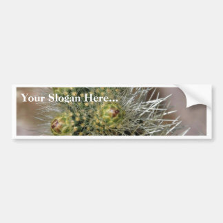 Cactus Needles In Anza Borrego Desert Bumper Sticker