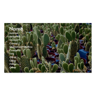 Cactus, Opuntia Microdasys-albispina Desert Pack Of Standard Business Cards