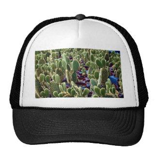 Cactus, Opuntia Microdasys-albispina Desert Trucker Hat