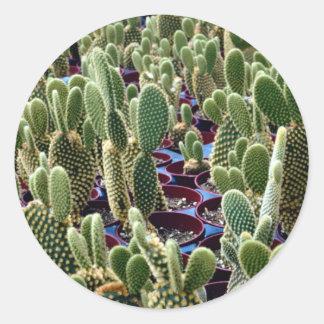Cactus, Opuntia Microdasys-albispina Desert Round Sticker