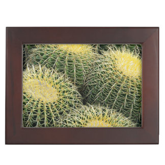 Cactus Pattern Keepsake Box