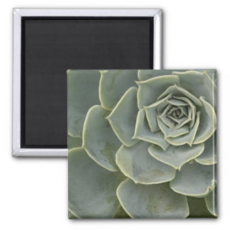 Cactus pattern magnet
