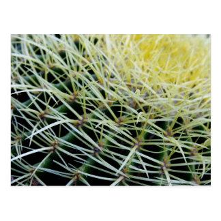 cactus post cards