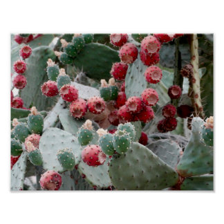 Cactus Red Fruit Photo Value Poster Paper