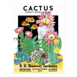 Cactus Seed Package Postcard