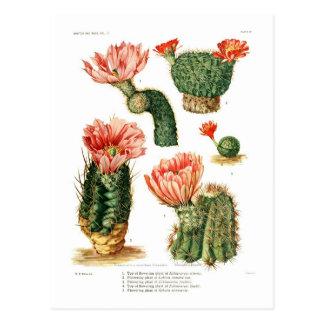 Cactus species postcard