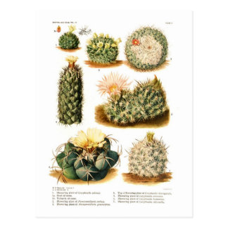 Cactus species postcard