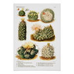 Cactus species poster