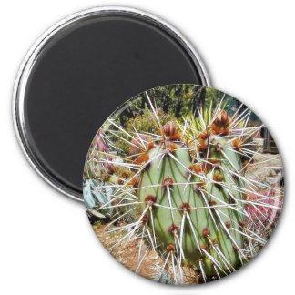 Cactus Spines Thorns Cacti Refrigerator Magnet