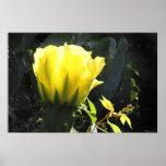 Cactus Sun Blossom Poster