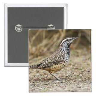 Cactus wren adult foraging 15 cm square badge
