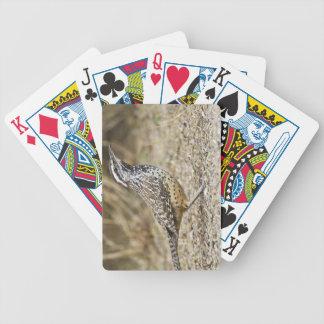 Cactus wren adult foraging poker deck