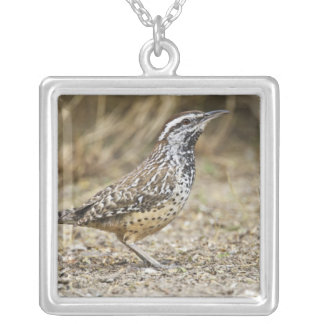 Cactus wren adult foraging square pendant necklace