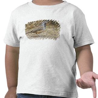 Cactus wren adult foraging tshirt