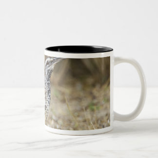 Cactus wren adult foraging Two-Tone coffee mug