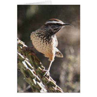 Cactus Wren Card