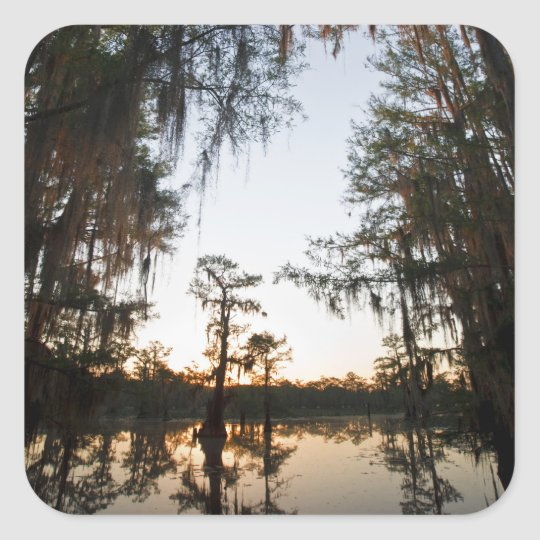 Caddo Lake at sunrise Square Sticker